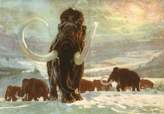 Mammoth (Mammuthus): Early Pliocene to Early Holocene (5 – 0.0045 Ma): Mammalia: Discovered by Brooke's, 1828: Artwork by Zdeněk Burian