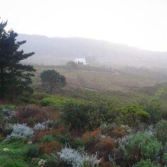 Winters morning on #Ataraxia #Wines #overberg #hermanus #HemelenAarde #HeavenandEarth #vineyards