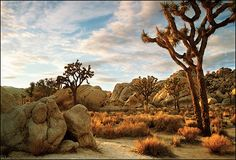 Hiking in Joshua Tree National Park, 3 hours from San Diego... You need to go when it's cool outside...