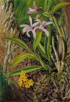 a Marianne North Painting at Kew Gardens Botanical Drawings, Botanical Art, Botanical Gardens, Plant Illustration, Botanical Illustration, Marianne North, Epiphyte, Orchidaceae, Kew Gardens
