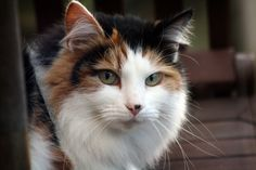 'Neighbours Cat' by Chris Isherwood on Flickr