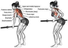 Invented by Mr. Olympia Dorian Yates, the underhand Yates row is a modified barbell row with an upright posture and shorter range of motion. Good Back Workouts, Gym Workouts, Muscle Fitness, Fitness Tips, Video Fitness, Fitness Style, Upper Back Exercises, Back Muscle Exercises, Sixpack Training