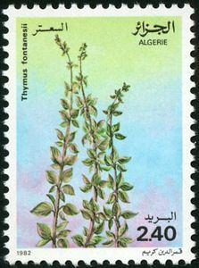 Thymus fontanesii