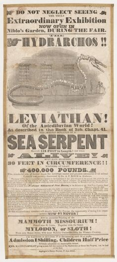 """Collection: Broadsides & Ephemera. Advertisement for exhibition of the hydrarchos, the skeleton of a """"sea serpent,"""" at Niblo's Garden, New York City, [1845].  Later revealed to be a hoax perpetrated by """"Dr."""" Albert Koch, assembled from bones of five different creatures (including some specimens of fossil cetacean Basilosaurus found in Alabama). Includes illustration of skeleton on display."""