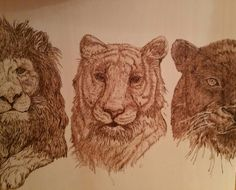 Wild lion, tiger and panter pyrography  www.facebook.com/giftsfire