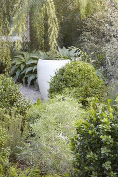 Landscape Designer Visit: At Home with Flora Grubb in Berkeley, CA - Gardenista Unique Gardens, Amazing Gardens, Beautiful Gardens, Flora Grubb, Side Garden, Garden Path, Garden Nook, Dry Garden, Green Garden
