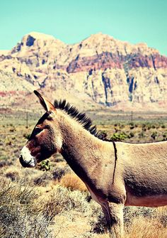 One of my cousins here in Red Rock Canyon National Conservation Area, near Las Vegas.