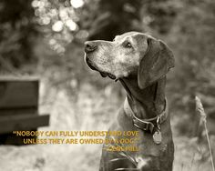 ♥ This sweet, senior Vizsla is the cover boy for my first dog photography eBook entitled Greatest Clicks. Heres the Amazon link: http://amzn.to/s5PN2W