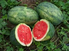 Watermelon Strawberry D55110abc (Red) 25 Organic Seeds by David's Garden Seeds David's Garden Seeds http://www.amazon.com/dp/B00T83F4K6/ref=cm_sw_r_pi_dp_z01Zwb19HTD1N