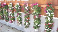 Flowers in PVC pipe.  Holly Crap!  I need this...