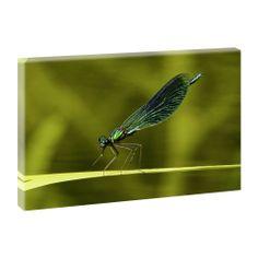 Top Bilder Kunstdruck auf Leinwand XXL -Libelle-100cm*65cm V0420349