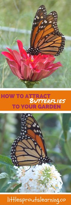 Would you love to have more nature in your garden? You and your kids can learn so much by watching the life-cycle and feeding habits of butterflies.