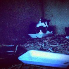 #日常#捨て猫#のらねこ #のらねこ部#野良猫#愛 #スナップ写真#スナップ #愛猫同好会 #愛猫 #アート #路地裏#写真好きな人と繋がりたい #写真好きの人と繋がりたい #写真撮るの好きな人と繋がりたい #japan #写真家#ねこ好きさんと繋がりたい #ねこ#猫物語#猫写真#ねこ部#photo #cats #cat #neko  これは夏のあさの出逢いだった。鳴き声がした。探してみたら四匹の猫が鳴いていた。そのうちの一匹は、目がみえない猫(ToT)だった。