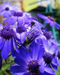 jardin et fleur :