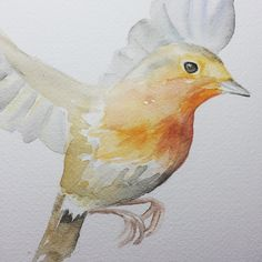 Robin Watercolor Painting 11 x 8.5 / 10 x 8 by SusanWindsor
