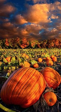 pumpkin patch....