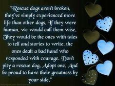 Rescue dogs are the best