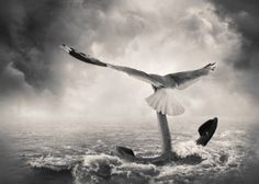 """Saatchi Art Artist Tommy Ingberg; Photography, """"Will - Limited Edition. Print 1 of 300"""" #art"""