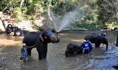 http://www.viaggivietnamcambogia.com/viaggi-di-lusso-in-thailandia/tour-di-lusso-in-thailandia-10-giorni.html