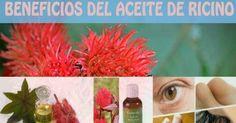 Beneficios sorprendentes del aceite de ricino para la salud