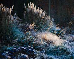 photo Duncan Heather Garden in Winter