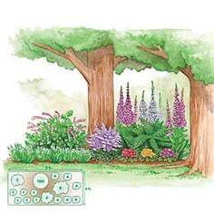 Pre-planned garden designs and layouts: Shade Garden Plans  A simplified way to enjoy a complete garden and easy landscape design without the necessary planning. Kit includes the layout and all the plants. Ideal for the new or busy gardener.  Large Carefree Garden