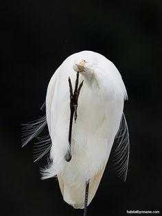 NZGeo2020 DouglasThorne Mount Ruapehu, Winter Road, Milford Sound, Photography Contests, Photo Story, New Zealand, It Cast, Judges, Birds