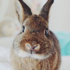 Awww! Bunnies, Rabbits, Rabbit, Bunny
