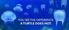 """""""You see the difference. A turtle does not."""". No idea of who made this campaign, but I like it (... and, yes, Turtles do eat jellyfishes)"""
