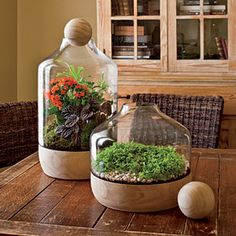 Glass Terrariums -- start plants indoors and brighten the dreary winter months.  Twofer!