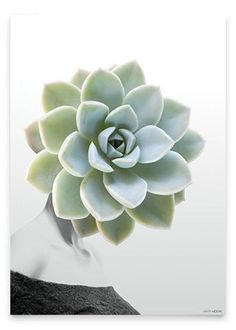Martin Moore - Succulent #1 Print, Two Sizes Available - norsu interiors