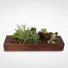 Succulent Garden in Wooden Rectangle Container window sill or center of coffee table Buy Succulents, Succulents In Containers, Container Plants, Planting Succulents, Succulent Centerpieces, Succulent Arrangements, Fake Plants Decor, Plant Decor, Succulent Care