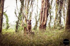 Dog photography in Serra de Sintra - Portugal