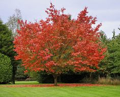 The Rich Colors of Fall Foliage | Autumn Foliage Images, Fall Leaves, Changing Leaves & Foliage | LiveScience