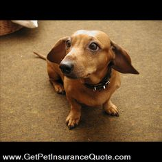 it is simple and easy to find the best pet insurance quote for your pet  getpetinsurancequote.com