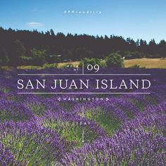 #PHroadtrip Week 9: San Juan Island, WA | picklesnhoney.com