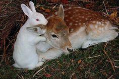 Friendships between animals
