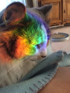 my cat was sitting in the middle of a rainbow I thought it was cool Follow me!! @t0nguelikecandy