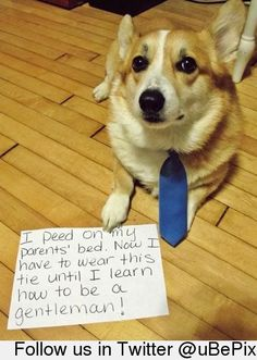 Punishment For Naughty Dog