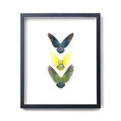 Agapornis Parrots, $1,150, now featured on Fab.