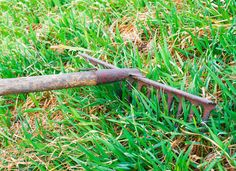 How To Dethatch a Lawn. 7 steps to rejuvenate your lawn