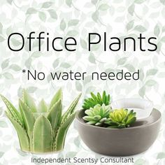 Scentsy Wax Warmer, Scentsy Uk, Electric Wax Warmer, Scentsy Independent Consultant, Wax Warmers, Office Plants, Scented Wax, Water, Fb Banner