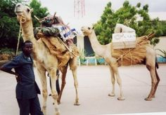 Camels are used by the Kenya National Library Service in North Eastern parts of the country to serve people living in nomadic settlements.  In a region characterised by harsh climatic conditions, bad terrain, and poor transport infrastructure, the camels carry books to children, adults, and community health workers who would otherwise be unable to access any library.