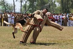 An Indian army soldier demonstrates the skills of a trained military dog during an event at the Army School in Nagrota, India April 26.
