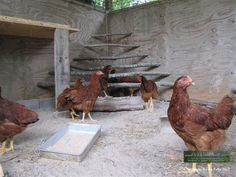 I like the roost in the corner and rustic look of it. If they all want on top tho there might not be enough room.