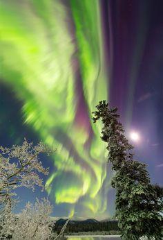 Yukon Aurora Northern lights over snow covered tree by Joseph Bradley of Joseph Bradley Auroras