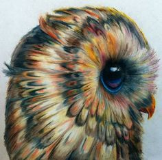 color pencil owl