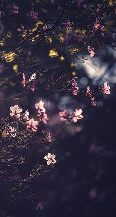 Beautiful Flowers Wallpapers, Beautiful Nature Wallpaper, Pretty Wallpapers, Beautiful Wallpaper, Cute Wallpaper For Phone, Flower Phone Wallpaper, Galaxy Wallpaper, Scenery Wallpaper, Cute Wallpaper Backgrounds