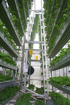 skygreens-vertical-farm-5   FAZENDAS VERTICAIS DA INDONÉSIA