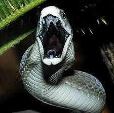 蛇 威嚇 - Google 検索